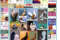Η 6η Πανελλήνια Έκθεση Σπανίων Πτηνών στην Ορεστιάδα