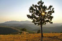 Πέραμα, Έβρου: Ο μοναδικός φυσικός θησαυρός, που απειλείται από τους χρυσοθήρες