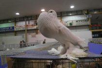 Έκθεση Σπανίων Πτηνών στην Ορεστιάδα