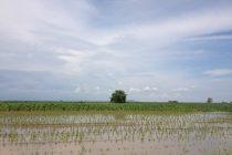 Ανακοίνωση της ΕΑΣ Διδυμοτείχου για δηλώσεις ζημιών από την πλημμύρα