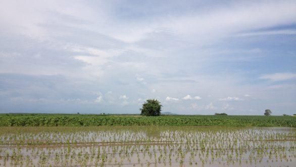 Χωρίς παραγωγή λόγω της πλημμύρας κινδυνεύουν να μείνουν αρκετοί Εβρίτες αγρότες