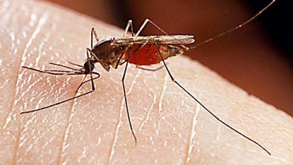Τρόποι για ν' απαλλαγείτε από τη φαγούρα του τσιμπήματος των κουνουπιών