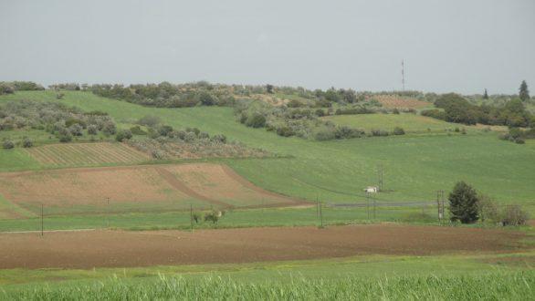 Παράταση αιτήσεων για το πρόγραμμα μικρών γεωργικών εκμεταλλεύσεων