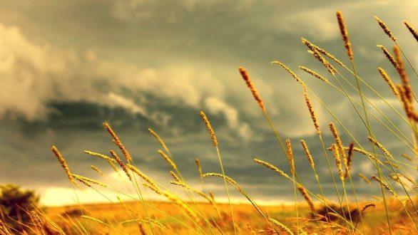 Νέος κύκλος ενημερωτικών εκδηλώσεων για τους αγρότες από το ΔΠΘ στην Ορεστιάδα