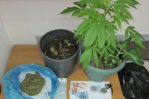 Σύλληψη για καλλιέργεια φυτών κάνναβης και πώληση ναρκωτικών