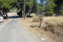 Τον καθαρισμό οικοπέδων ζητά ο Δήμος Σαμοθράκης