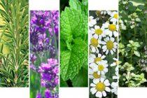 Αλεξανδρούπολη: Συνάντηση για ενδιαφερόμενους καλλιεργητές αρωματικών και φαρμακευτικών φυτών