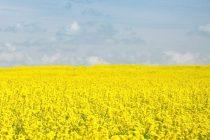 Έναρξη κατάρτισης συμβάσεων για καλλιέργεια ελαιοκράμβης από την ΕΑΣ Ορεστιάδας