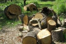 Δωρεά ξυλείας από την Ι.Μ. Ιβήρων στον Ναό της Χώρας Σαμοθράκης