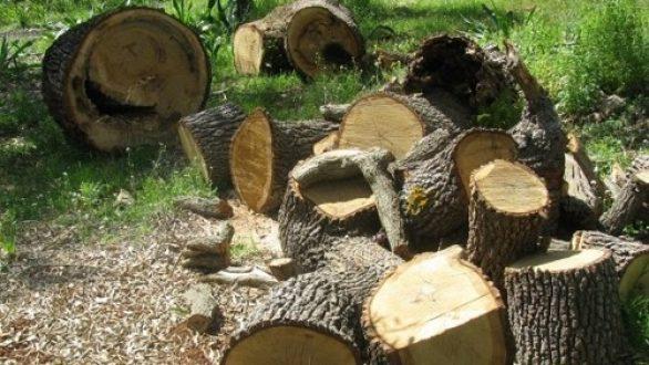 Σαμοθράκη: Ξεκινούν οι αιτήσεις για προμήθεια καυσόξυλων