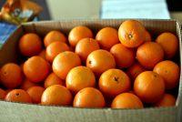 Αν έχεις πορτοκάλια στην κουζίνα, κάνε αυτή την κίνηση πριν πετάξεις τη φλούδα