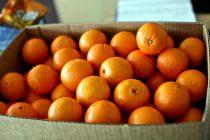 Διανομή πορτοκαλιών από το Πολυκοινωνικό Αλεξανδρούπολης