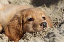 """""""Ημέρα υιοθεσίας σκύλου"""" αύριο  στην Αλεξανδρούπολη"""