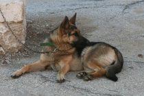 Σύλληψη για εγκατάλειψη σκύλου στην Ορεστιάδα