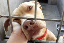 Εξιχνίαση απάτης για πώληση σκύλου μέσω διαδικτύου