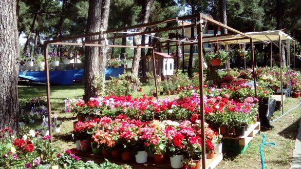 Βόλτα στα πεύκα… σ' ένα λουλουδένιο πανηγύρι γεμάτο από χρώματα και μυρωδιές…
