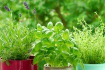Τα φυτά βγάζουν ήχους απόγνωσης όταν στρεσάρονται!