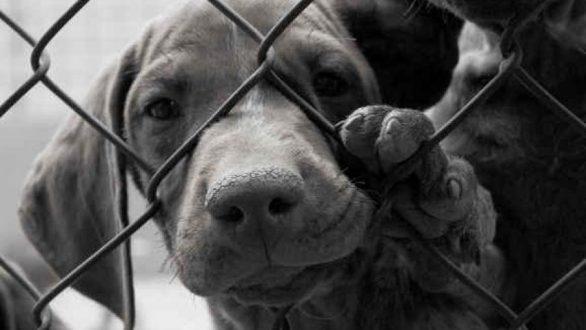 Αλεξανδρούπολη: Σύλληψη 58χρονης για παράνομη εμπορία σκύλων