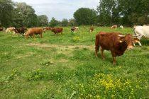 Στον Βορίδη σήμερα οι κτηνοτρόφοι της ΑΜΘ