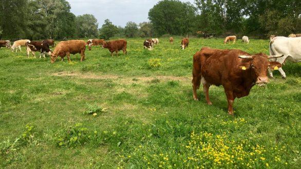 Οι κτηνοτρόφοι της ΑΜΘ  καταγγέλλουν στο ΥπΑΑΤ  δεσμεύσεις από τις τράπεζες