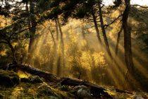 Δημοπράτηση για την εγκατάσταση συστήματος έγκαιρης ανίχνευσης πυρκαγιών στο δάσος Δαδιάς-Λευκίμης-Σουφλίου