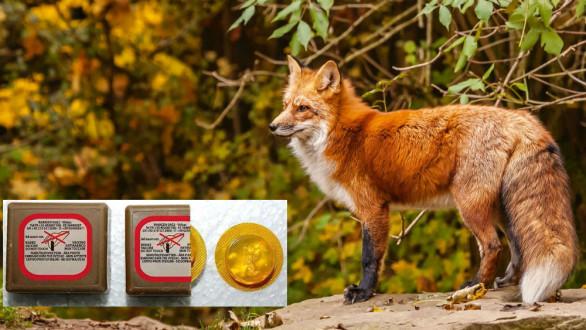 Εμβολιασμοί των κόκκινων αλεπούδων για τον ιό της λύσσας