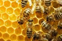 Ανακοίνωση για τη ζημία σε μελισσοτρόφους σε Φέρρες και Πέπλο