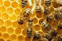 44.050 ευρώ στον Αγροτικό Μελισσοκομικό Συνεταιρισμό Ν. Έβρου