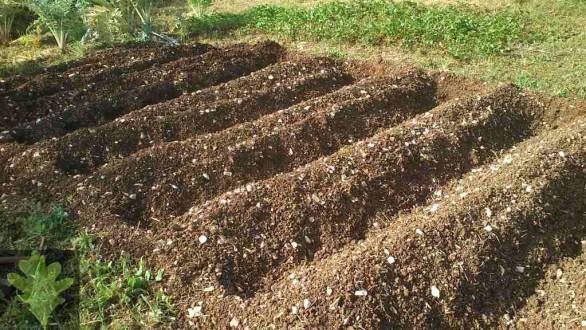Οι αγροτικές εργασίες τον Μάιο, τι φυτεύουμε, σπέρνουμε