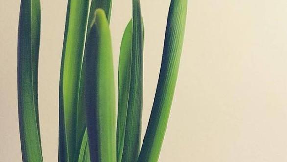 Μήνας γενεθλίων των λουλουδιών