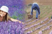 """Ημερίδα: """"Αρωματικά Φυτά: Προοπτικές και πλαίσιο ανάπτυξης"""" στις Φέρες"""