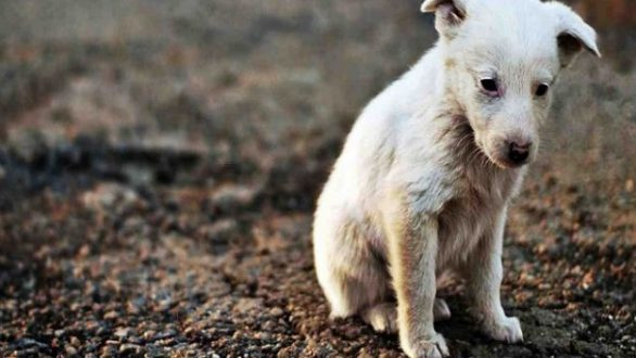 4 Απριλίου: Παγκόσμια Ημέρα Αδέσποτων Ζώων