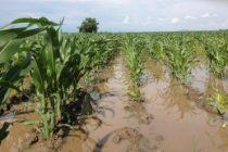 Σουφλί: Υποβολή δικαιολογητικών για καταγραφή ζημιών αγροτικών εκμεταλλεύσεων από πλημμύρες