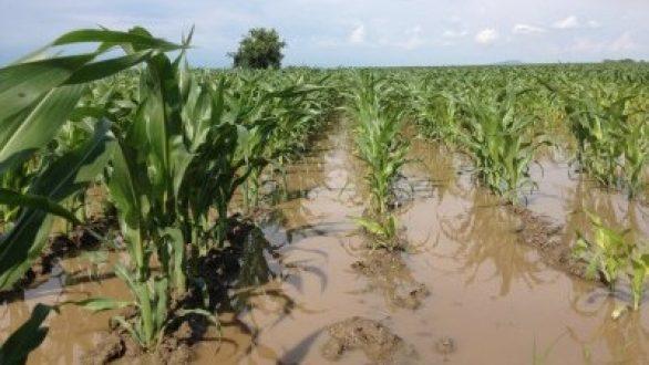 Π.Ε. Έβρου: Υποβολή δικαιολογητικών για καταγραφή ζημιών αγροτικών επιχειρήσεων από τις πλημμύρες