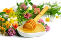 Εορτασμός της Παγκόσμιας Ημέρας Γης με δράσεις για το μέλι στο Μουσείο Μετάξης