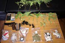 Συλλήψεις τριών ατόμων για καλλιέργεια κάνναβης στον Έβρο