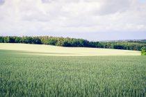 Παράταση για την παραχώρηση χρήσης αγροτικών ακινήτων σε αγρότες ή άνεργους