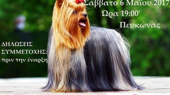 2α Καλλιστεία Σκύλων στην Ανθοκομική Έκθεση Ορεστιάδας!