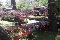 16η Ανθοκομική Έκθεση Τοπικών Προϊόντων και Γαστρονομίας στην Ορεστιάδα