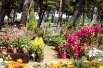 """Το Ράδιο Έβρος και το """"Άρωμα Μελωδίας"""" σε λουλουδένια γιορτή με το """"Ηχόχρωμα"""" στον Πευκώνα της Ν.Ορεστιάδας το σήμερα στις 12…"""