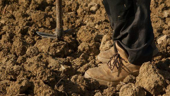 ΟΠΕΚΕΠΕ: Πληρωμές σε αγρότες και παραγωγούς – Τι μπορούν να κάνουν όσοι δεν πληρώθηκαν