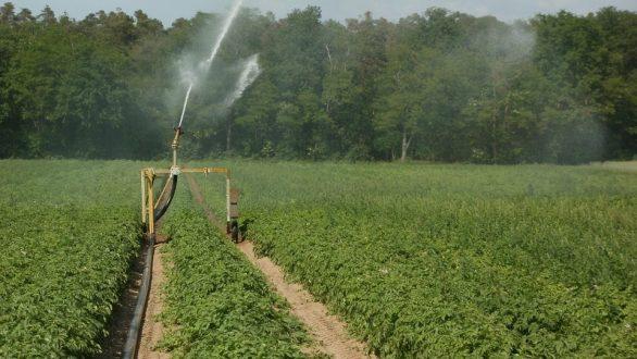 ΠΑΜΘ: Υπόμνημα σε ΥπΑΑΤ για αποζημιώσεις στους παραγωγούς πατάτας