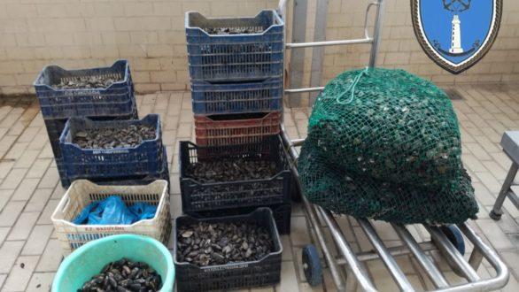 405 κιλά ακατάλληλα όστρακα κατασχέθηκαν στο λιμάνι της Αλεξανδρούπολης