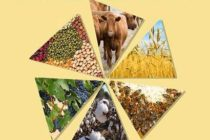 11 Σεπτεμβρίου ανοίγει τις πύλες της η 22η Πανέβρια Αγροτική Έκθεση Φερών
