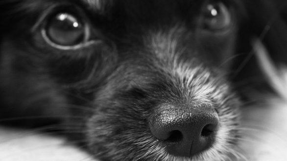 Περιστατικό δηλητηρίασης αδέσποτων σκύλων στο Διδυμότειχο