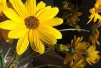 Ένα κέρμα θα κρατήσει τα λουλούδια φρέσκα!