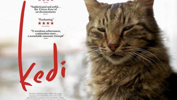 """""""Οι Γάτες την Κωνσταντινούπολης"""" από την Κινηματογραφική Λέσχη Αλεξανδρούπολης"""
