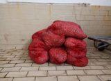 431 κιλά ακατάλληλα όστρακα κατασχέθηκαν στην Αλεξανδρούπολη