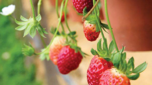Πώς να βγάλετε εύκολα το λεκέ από φράουλα
