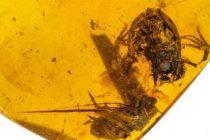 Ανακαλύφθηκαν τα αρχαιότερα βατραχάκια εγκλωβισμένα μέσα σε κεχριμπάρι 99 εκατ. ετών